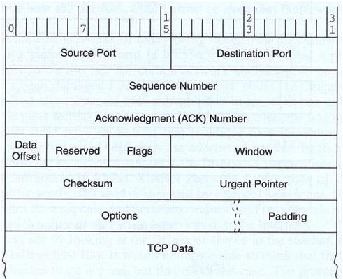 1001_TCP Segment Structure.png