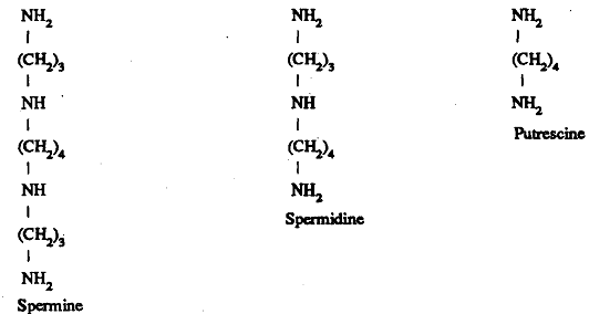 1005_Synthesis of Polyamine.png
