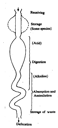 1094_Digestive Tract.png