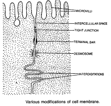 1124_modifications of cell membrane.png
