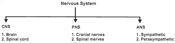 120_nervous system chart.png