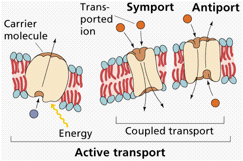 1218_active transport.png