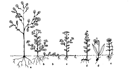 Examples of Hydrophytes http://www.expertsmind.com/questions/cryptophytes-classes-of-life-form-30128838.aspx