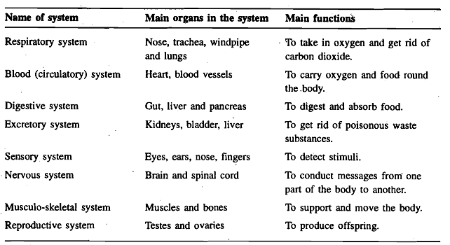 1257_Systems of Human Body.png