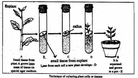 1306_Tissue culture.png