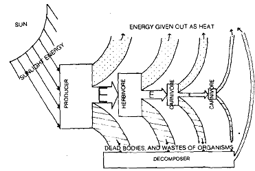 1349_Energy Flow in the Ecosystem.png