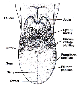 1501_tongue structure.png