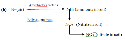 1517_nitrogen cycle1.png