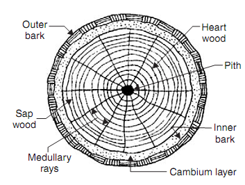 Cross Section Of Exogenous Tree 30118331 in addition How To Draw A Tree For Kids besides I0000hH7Qj2q furthermore Harry Potter's wand likewise 370597360644. on old rings