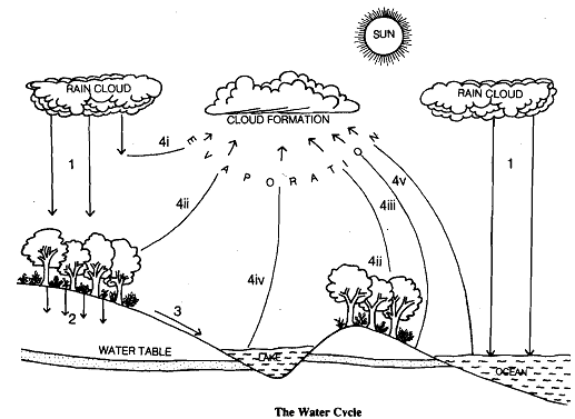 1527_water cycle.png