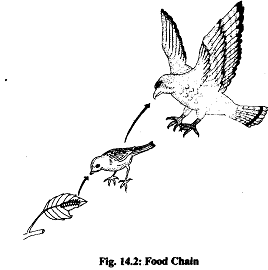 1576_food chain.png