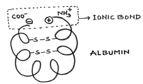 1637_tertiary structure.png