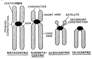 1677_chromosome structure1.png