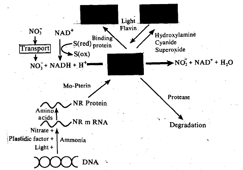 1697_Enzyme-activity Control.png