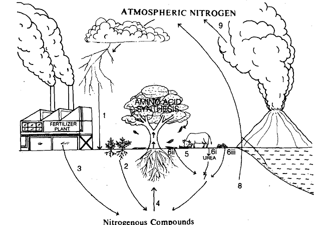 1715_Nitrogen Cycle.png