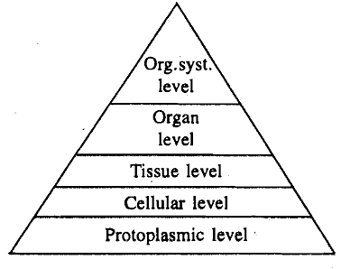 1846_Protoplasmic - Level of body organization.png