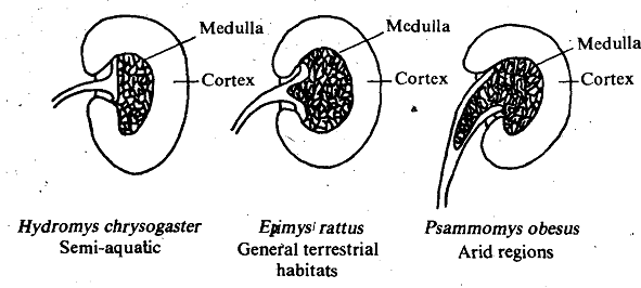 1879_Ability of Mammalian Kidney.png