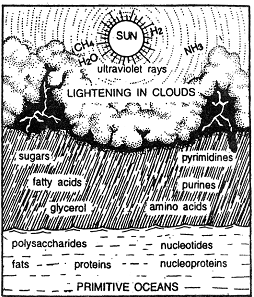 1924_biochemical origin of life.png