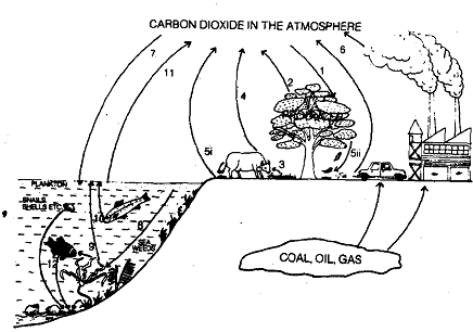 1945_Carbon Cycle.png