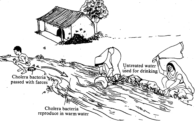 1952_Water Borne Diseases.png