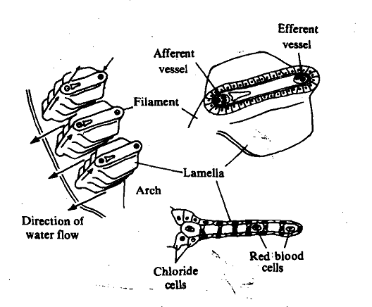 197_Body Fluids of Marine Teleost.png