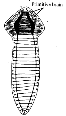 198_Platyhelminthes.png