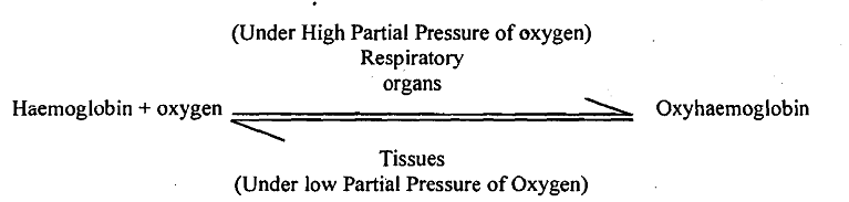 2033_Functions of Respiratory Pigments.png