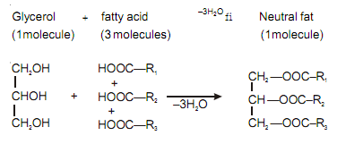 2036_neutral fats and oils.png
