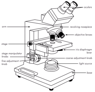 2046_Bright Field Microscopes.png