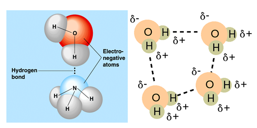 essays chemical bonding Atomic structure and bonding • periodic tendencies • chemical questions and  reactions • radioactivity and chemical spills • solutions and concentrations.