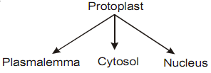 2215_protoplast.png