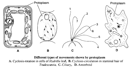 2273_biological properties of protoplasm.png