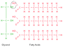 2331_fats and lipids.png