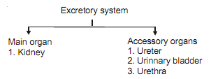 2384_excretory system chart.png