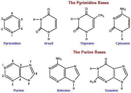 What is nucleotides, What is Nucleotides? Nucleotides are