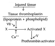 359_extrinsic pathway of blood coagulation.png
