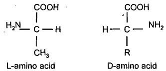 amino acid dating definition 41 radiocarbon dating 42 amino-acid dating 43 luminescence dating 5 references chronostratigraphy is the definition of internationally agreed boundaries to units of strata (systems, series and stages) that correspond to intervals of geological time (periods, epochs and ages) the cainozoic era is.