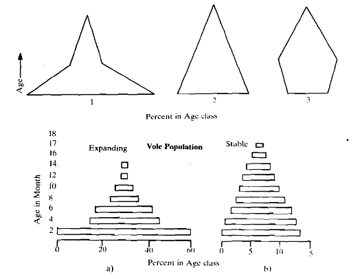 404_Hypothetical Age Pyramids.png