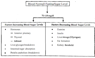 factors affecting blood glucose levels A linear relationship between glucose utilization and blood glucose levels they also suggested that insulin might act by stimulating a specific enzymatic system furthermore, they were much concerned about the hyperglycemic factor con tained in insulin used for experimental purposes as well as clinical treatment (32).