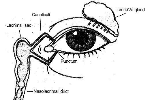 546_Functions of the lacrimal apparatus.png