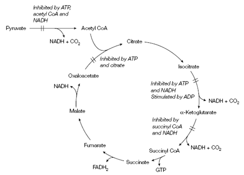 regulation of tca cycle pdf