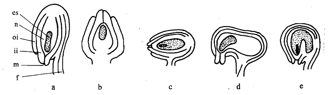 752_Kinds of Ovules.png