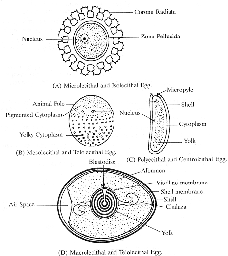 764_structure of eggs.png