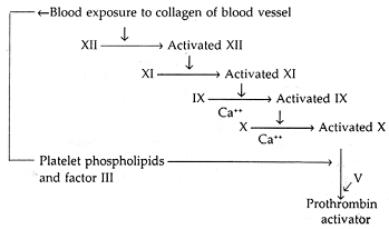 781_intrinsic pathway of blood coagulation.png