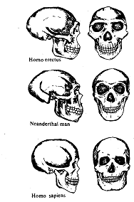 872_Neanderthals.png